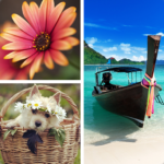 Photo Collage Editor Mod Unlimited Money