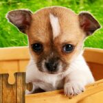 Dogs Jigsaw Puzzles Game – For Kids Adults Mod Unlimited Money